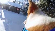 Perdu dans 50cm de neige ce chien découvre l'hiver !
