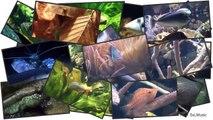 [HD] Feeding Moray eels and Scorpionfish _ Muränen & Skorpionfische @ Aquazoo [14_52]-0f-rJjrbXYo