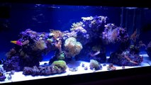 Beautiful 40 gallon Mixed Reef. Soft Corals, LPS and SPS corals-ENPBa_WdKfA