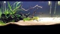 Black Beard Algae - 3 Easy Ways to Destroy BBA in your Aquarium_Plus Keeping BBA from Returning.-wk3wShH4vNM