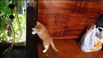 Cats and Fish  Funny Cats Trying To Catch The Fish (Full) [Funny Pets]