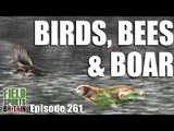 Fieldsports Britain - Birds, Bees & Boar