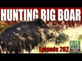 Fieldsports Britain - Hunting Big Boar