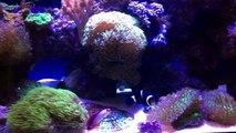 Purple Fire Goby plus My Aquarium Box Canada and New Box Options-JlY-9GX32mA
