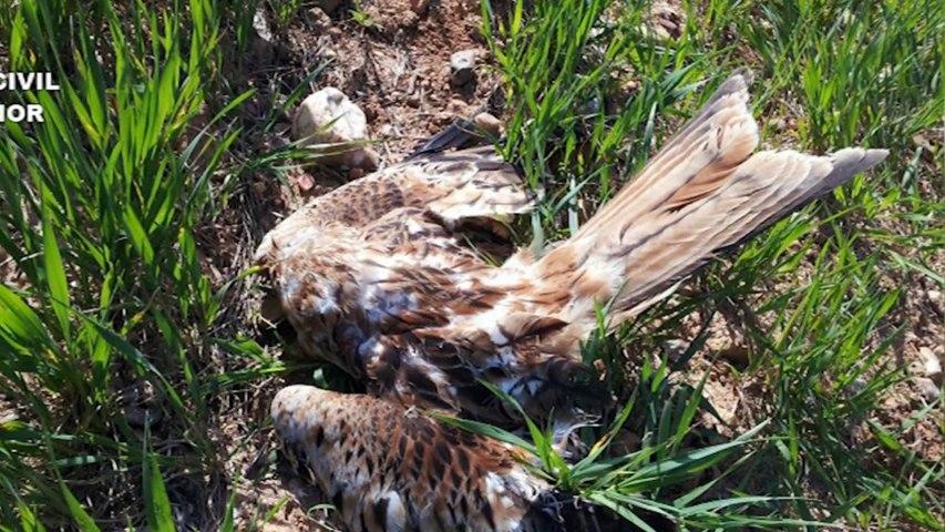 Decenas de animales muertos: La Guardia Civil detiene e investiga a 16 personas por uso de venenos