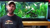 Shout out to Driftwood Aquariums.-TTqIFGmiVZI