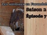 Les animaux en farandole: saison 2: épisode 7