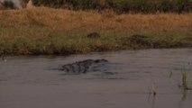 En kayak ces 2 touristes se font charger par un crocodile énorme... Flippant