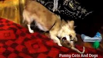 Funny Cats Compilation - Funny Cat Videos - pet kittens - pets kitty PART - 6-mrQQNKeqE4M