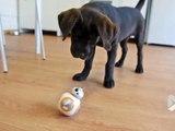 Ce droide BB-8 rend un chien complètement fou !