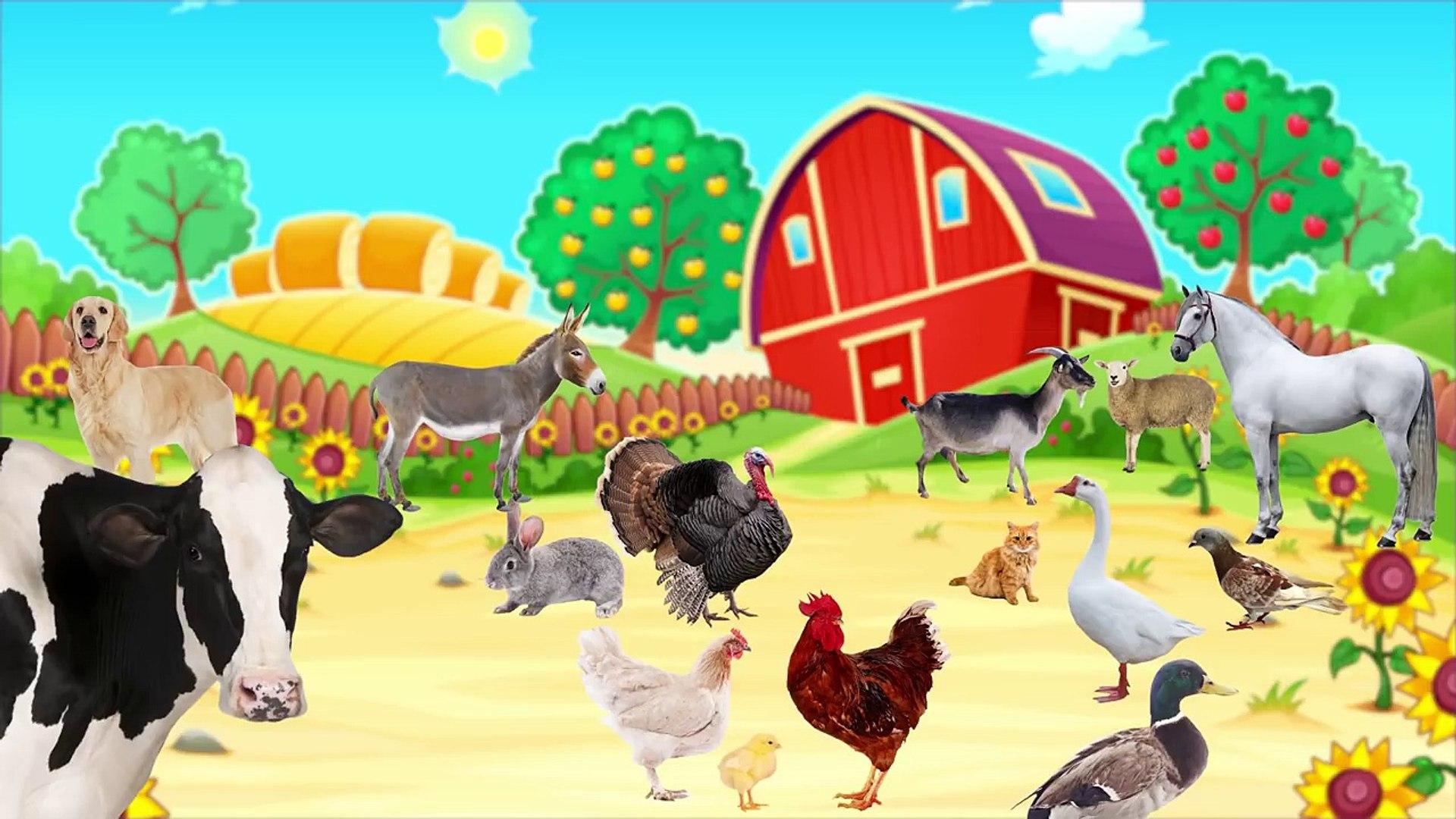 Çocuklar İçin Hayvanlar ve Hayvan Sesleri - Hayvanları Öğreniyoruz