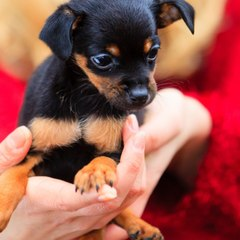 SQUARE of Giving Pets for the Holidays SPOKE