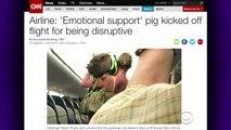 Are We Taking Comfort Animals Too Far-0Gq5_6YBKcU