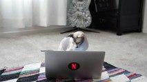 Netflix Employees Cats React: Stranger Things | Digital Exclusive | Netflix