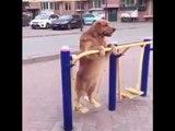 Spor yapan Köpek :)