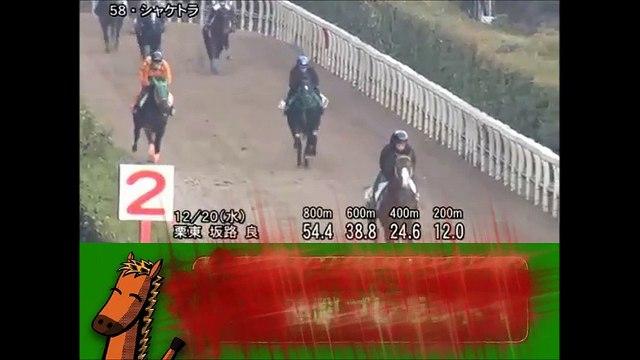 有馬記念 シャケトラ調教動画 2017年