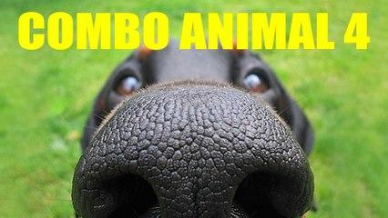 COMBO ANIMAL 4