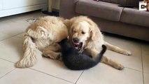 Je te mange, je te mange pas, je te mange... Je te mange pas! Chien et chat adorables
