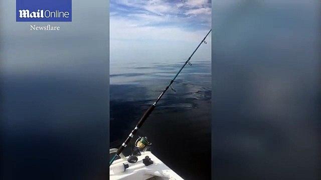 Terrifying moment huge great white shark circles boat