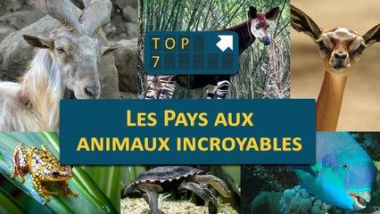 TOP 07 : Les pays aux animaux INCROYABLES !