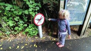 Tiny Home Tiny Xmas Tree Bus Life NZ Episode 83
