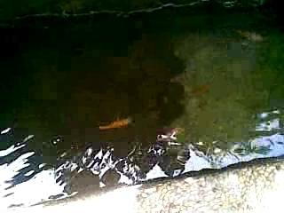 narrow pond