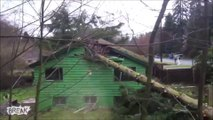 2 bucherons débiles détruisent une maison en coupant un arbre