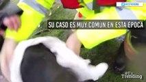 Autoridades rescatan a perros atrapados en lagos congelados