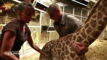 Demain soir sur C8 à partir de 21h00, c'est une soirée spéciale consacrée aux animaux. Découvrez les premières images