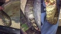 Un serpent se mord la queue