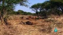 AFRICA  ANIMALES RAROS 1,DOCUMENTALES DE ANIMALES,ANIMALES SALVAJES,ANIMALS,ANIMALES FANTASTICOS