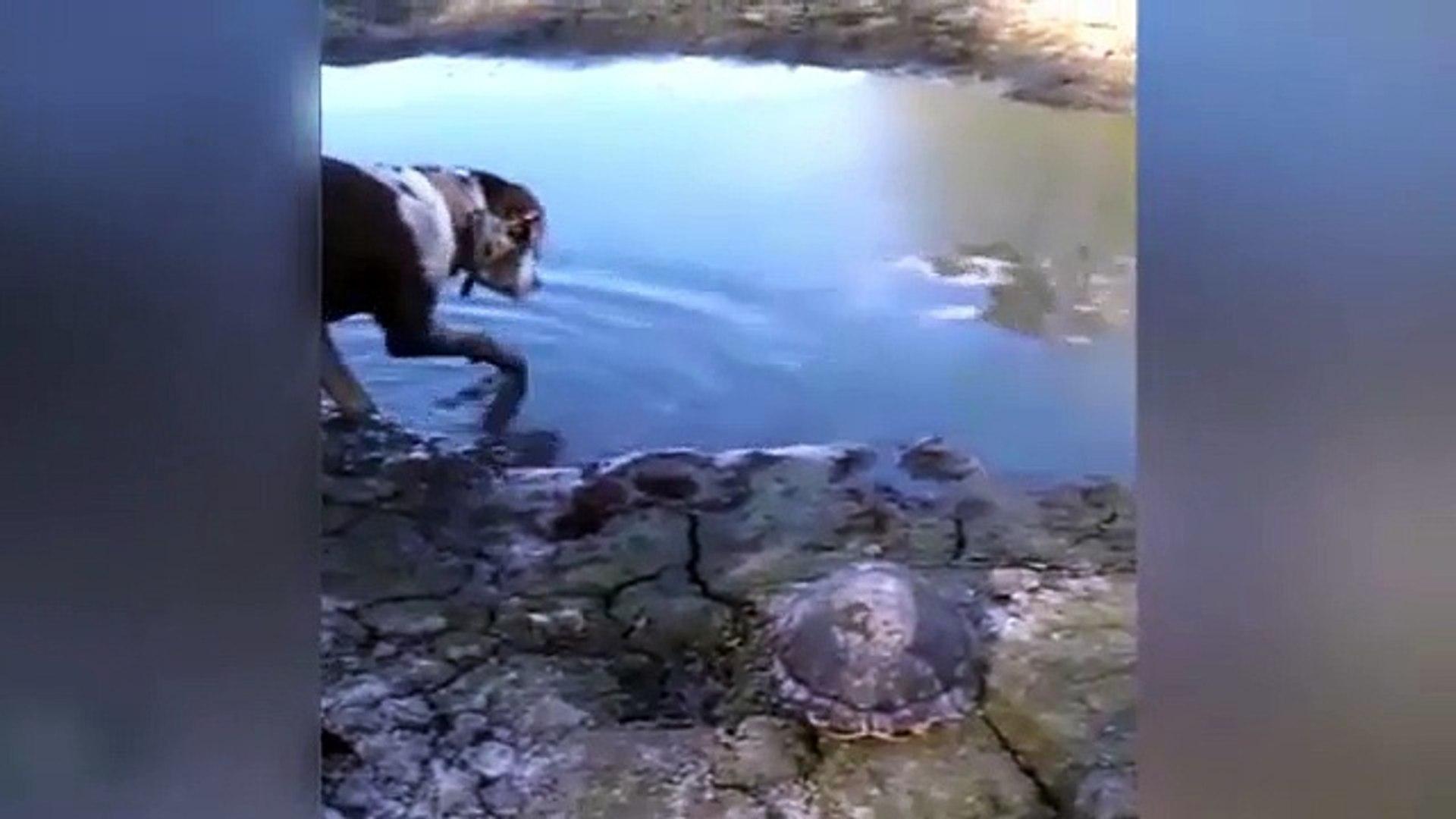 TiMSAH AV KOPEGiNi TEK HAMLEDE YAKALAYIP YUTTU - HUNTiNG DOG vs CROCODiL