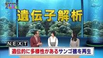 [NHK] サイエンスZERO - 遺伝子解析でサンゴを救え! (2017.02.19)