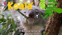 Koala Lalala _ Koala _ Animal Songs _ Pinkf