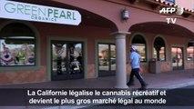 Ça plane pour la marijuana récréative en Californie