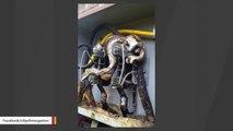 Voilà ce qui se passe quand un gros serpent entre dans un transformateur electrique... Grillade
