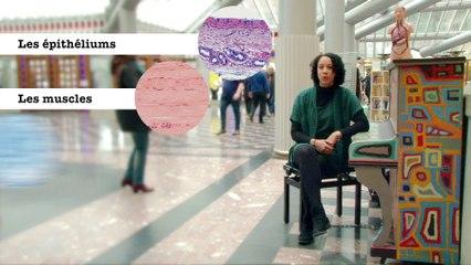 FUN MOOC : Introduction à l'histologie. Exploration des tissus du corps humain - Session 3
