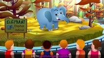 Finger Family Elephant _ ChuChu TV Animal Finger Family Songs & Nursery Rhymes For