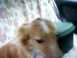 Console+vidéos chiens agility+ chiens 014