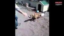 Un homme provoque un pitbull attaché lorsque sa laisse lâche soudainement (Vidéo)