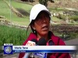 Cultivos dañados por granizada en la provincia de Chimborazo