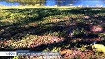 Etats-Unis : Le grand froid qui touche même la Floride fait des victimes chez les animaux comme les iguanes ! Regardez