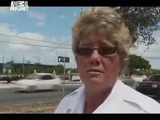 Animal Cops Miami Animal Menagerie