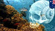 The world's coral reefs are dying much faster than you think
