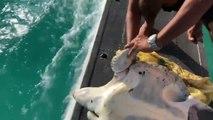 Sauvetage d'une Tortue... en hydravion arrêté sur l'eau !