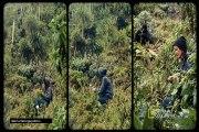 Part1 DIAN FOSSEY MUERTE EN LA NIEBLA(la mujer de los gorilas)