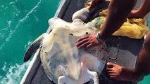 Il sauve une tortue en hydravion arrêté sur l'eau !