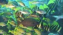 菅原一秀 水中で止まる魚たち