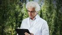 These Entrepreneurs Discuss The Different Sides Of The Cannabis Industry