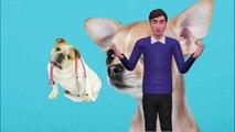 3 Cosas Que Puedes Hacer Cuando Tu Perro ES Envenenado
